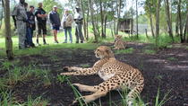 Wild Cat Experience Tour, Garden Route