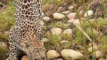 Wild Cat Photographic Tour, Garden Route, Photography Tours