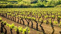 Private Cava Experience Penedes Tour From Barcelona, Barcelona, Private Sightseeing Tours