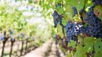 2 Day Marsala Wine Tour, Trapani, Ports of Call Tours