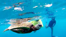 North Shore Turtle Beach Snorkeling Tour, Oahu, null