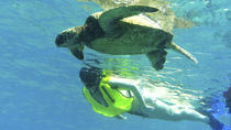 North Shore Turtle Cove Guided Snorkeling Tour, Oahu, Full-day Tours
