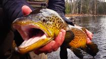 Guided Fishing Trip in Jackson Hole