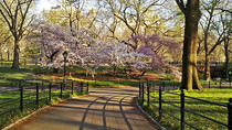 Central Park – Fahrradverleih, New York City