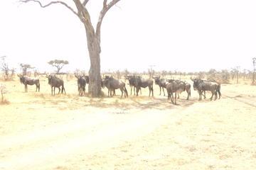 3-Day Safari Trip to Masai Mara National Reserve from Nairobi