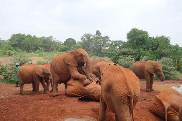 Excursión al santuario de elefantes...