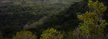 Full-Day Tour to Shimba Hills...