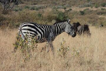 Kenya Safari Package to Amboseli National Park for 2 days