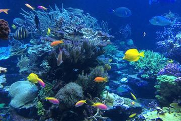 Falmouth Shore Excursion: Private Snorkel Tour