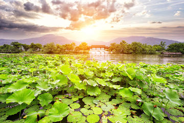 Private Tour Hangzhou West Lake and Tea Fields Discovery