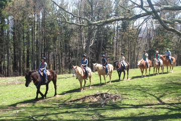 Book Flame Azalea and Fern Forest Combo Horseback Trail Ride on Viator