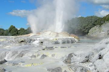 Heldagstur fra Auckland til Rotorua