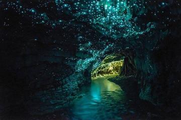Visite privée: excursion d'une journée aux grottes de Waitomo au...