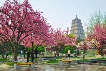 2 Days Xian Small Group Tour: Terracotta Army and City Sightseeing