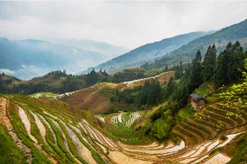 One Day Longji Terrace Field Private Tour