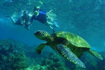 Croisière touristique privée avec plongée libre à Saint-Martin