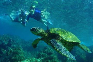 Mergulho com snorkel e excursão de descoberta em São Martim