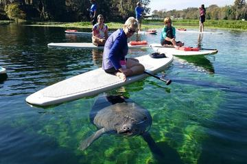 Book Stand-up Paddleboard with Manatees on Viator