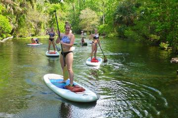 Day Trip Wekiva Spring Stand Up Paddleboard and Swim near Longwood, Florida