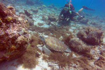 3-Day SSI Open Water Scuba Diving