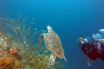 4-Day PADI Open Water Diver Course in Curacao