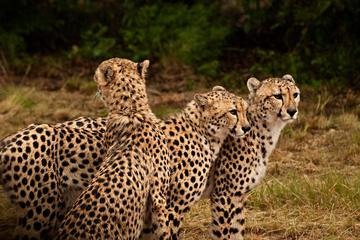 Ann Van Dyk Cheetah Centre Half-Day...