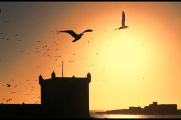 Viagem diurna privada de Marraquesh para Essaouira