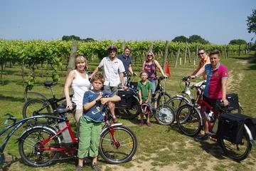 Tour in bicicletta dei vigneti nel
