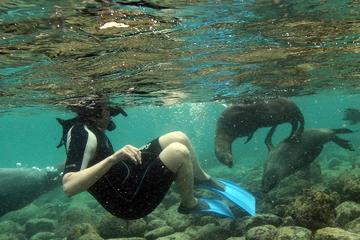 La Jolla Cove and Cave Snorkel Tour