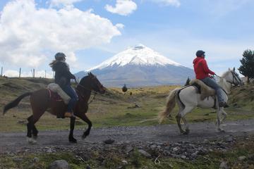 Cotopaxi Volcano Horseback Ride Excursion from Quito