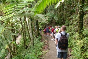 El Yunque Rainforest Nature Walk