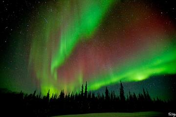 Northern Lights Lodge Viewing in Fairbanks