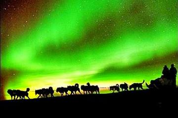 Northern Lights Viewing including...