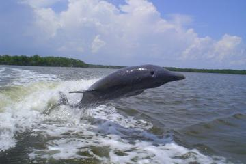 Book Manatee Ecotour and Shelling Adventure on Viator