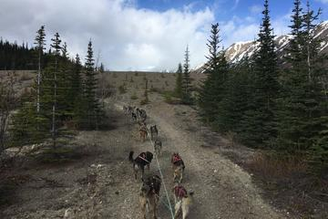 Day Trip Sled Dog Adventure and Pan for Gold in the Yukon near Skagway, Alaska