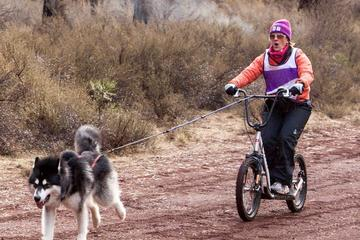 Day Trip Dog Powered Scooter Jor-ing in Pagosa Springs near Pagosa Springs, Colorado