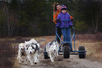 Day Trip Dogsledding Adventure On Wheels near Pagosa Springs, Colorado