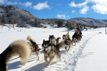 Day Trip Private Dogsledding Experience near Pagosa Springs, Colorado