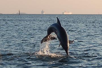Croisière touristique d'une heure et demie avec les dauphins au...