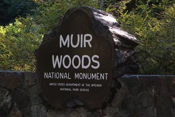 Excursión de un día a Muir Woods, Sausalito y Tiburón desde San...
