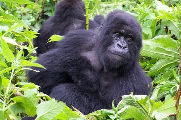 18-Day Overland Mountain Gorilla To The Mara Tour from Nairobi