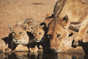 24-Day Overland South East Adventure Tour from Nairobi