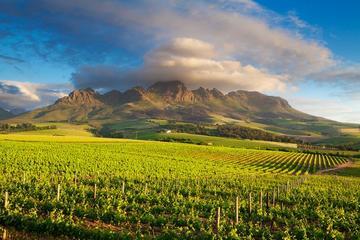 Tour ab Kapstadt durch Weingegend des Kaps