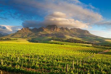 Tour di Cape Winelands da Città del Capo