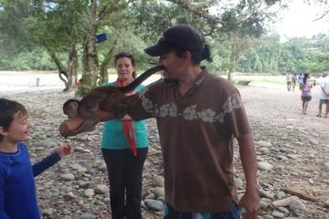 Day Jungle Tour in the Napo River of...