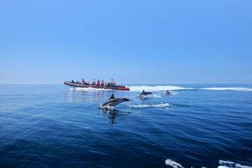 Avistamiento de delfines y recorrido en cueva desde Albufeira