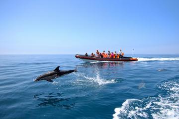 Excursão de observação de golfinhos e caverna saindo de Vilamoura