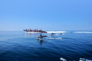 Private Dolphin Watching and Cave Tour from Vilamoura
