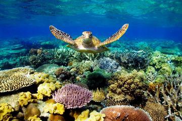 3-daagse Beste van Cairns-combi: Daintree-regenwoud, Great Barrier Reef en Kuranda