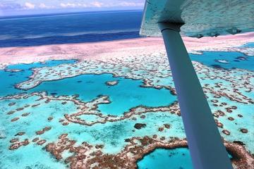 8-Day Cairns Tour: Great Barrier Reef, Kuranda, Daintree Rainforest
